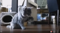 ネコとの戦い