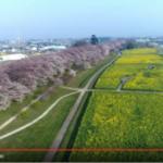 【空中お花見】桜の名所を空中散歩しましょう♫
